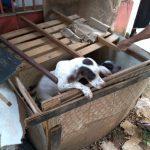 Polícia resgata cães vítimas de maus-tratos, trancados em caixa