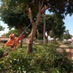 Operação poda-de-árvore em Santa Maria