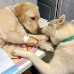 Cão conforta amigo em clínica veterinária e foto viraliza